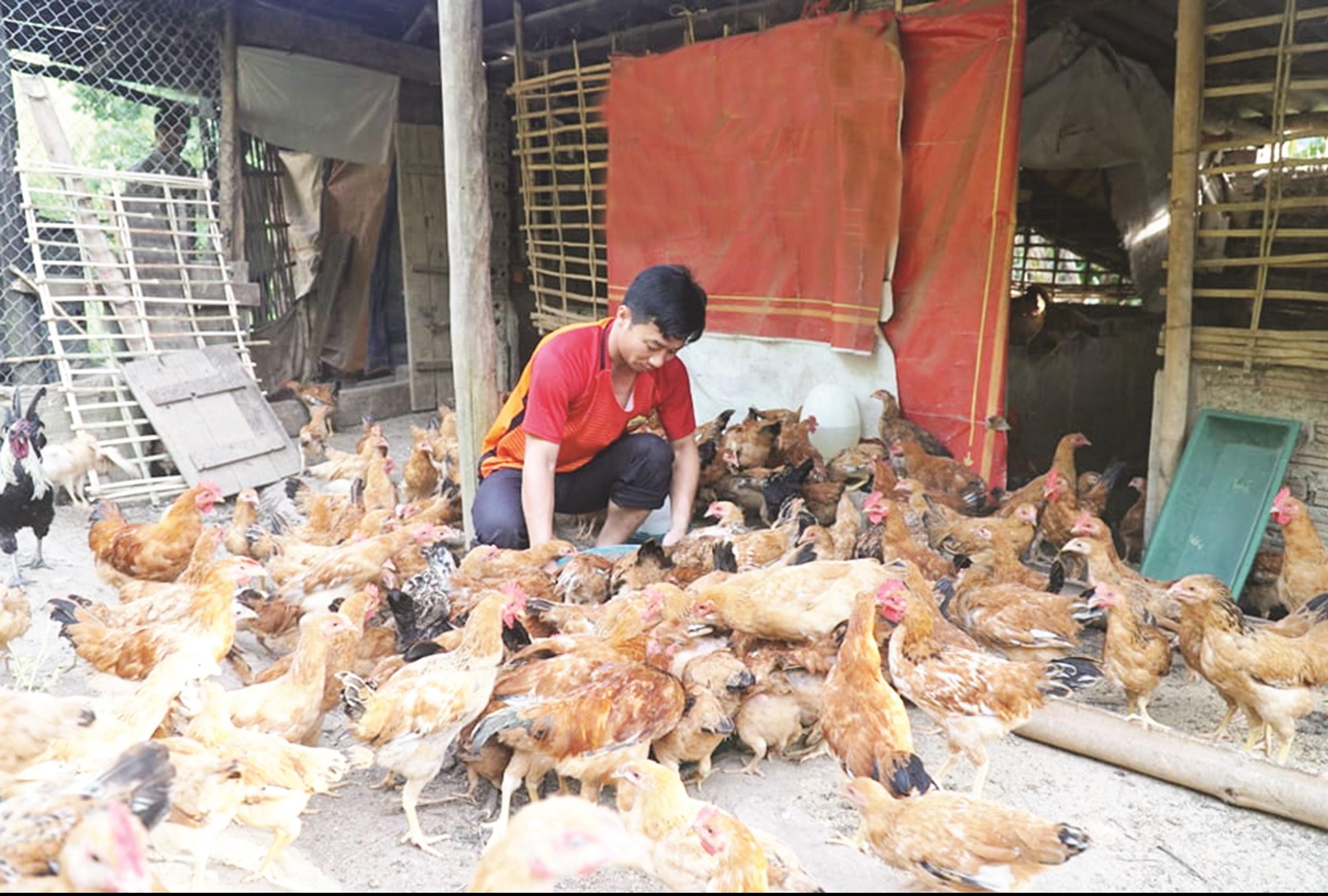 Nông thôn hoàn toàn có thể làm giàu bằng từ nuôi gà ta